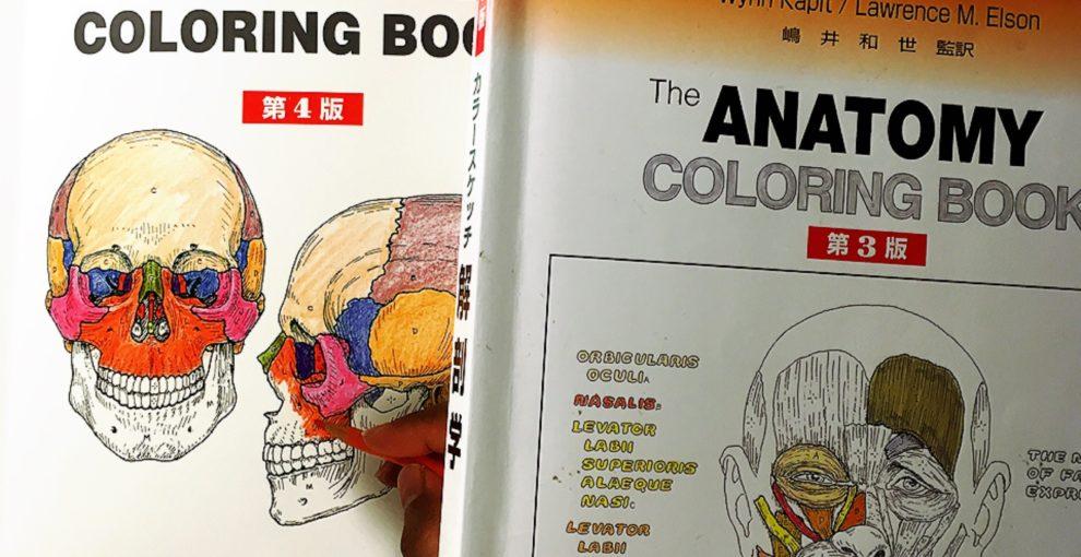また最初から/カラースケッチ解剖学