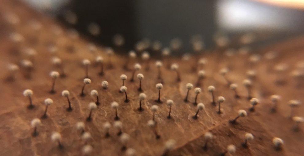「エゴ」はなくても個性は残るのかな/「変形菌」展を見て